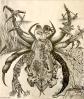 Arachnoiditis Art